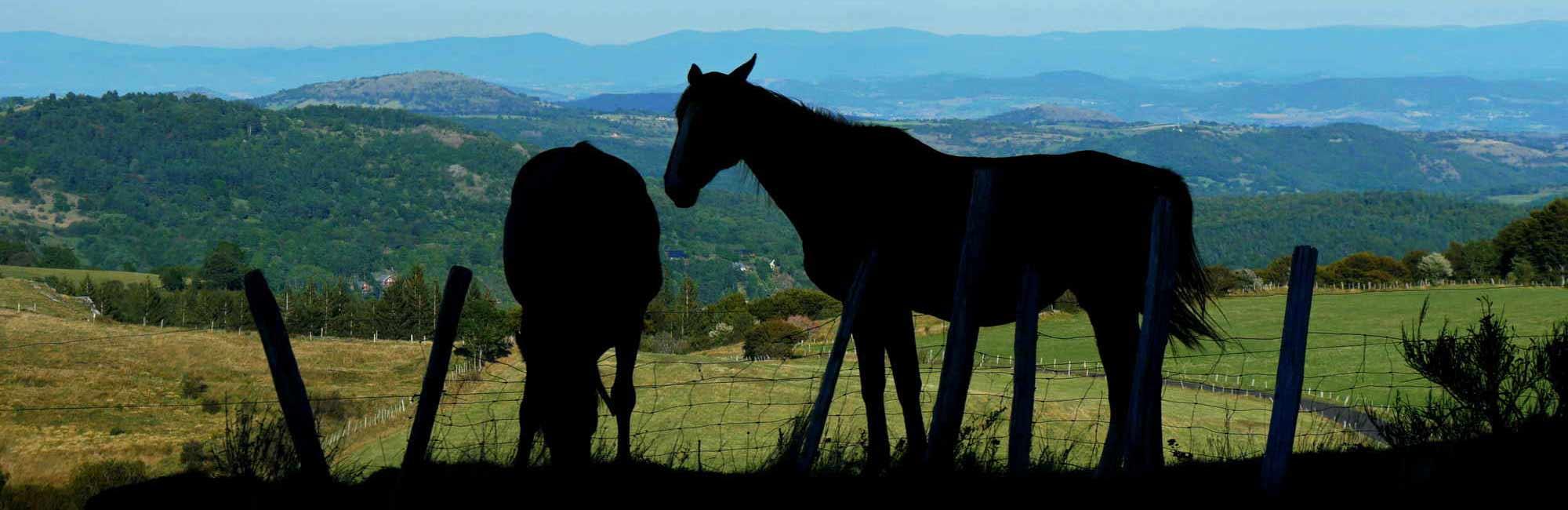 Pferde in der Landschaft